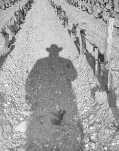 CowboyShadow