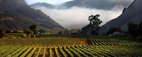 The famous Bien Nacido vineyard in the fog