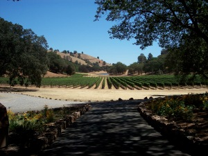 CaliforniaVineyard