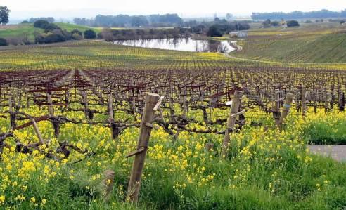 The Hyde Vineyard