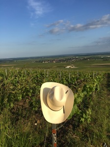 Bear's Hat at the top of the grand cru slope above the village of Bouzy in Champagne